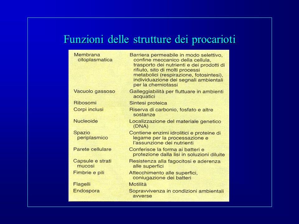 Funzioni delle strutture dei procarioti
