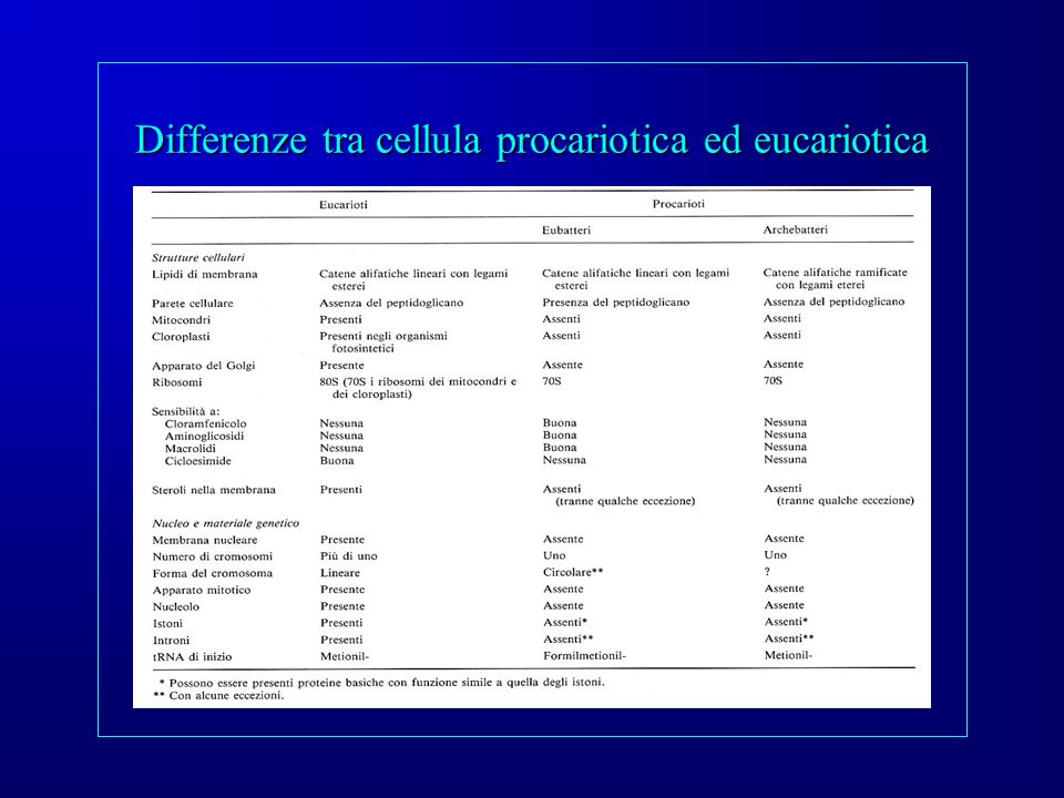 Differenze tra cellula procariotica ed eucariotica