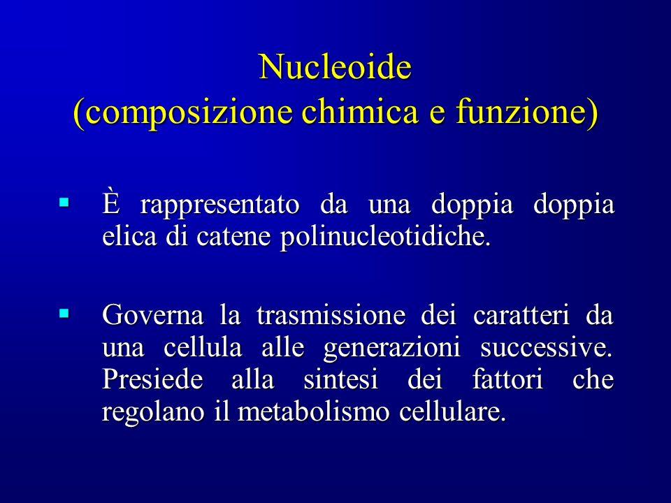 Nucleoide (composizione chimica e funzione)