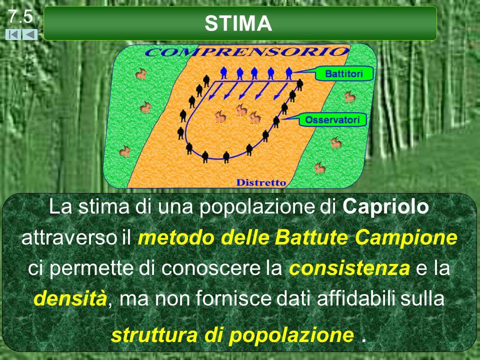7.5 STIMA.