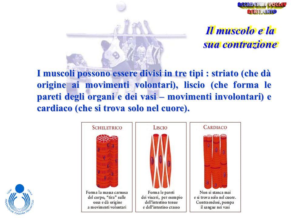 Il muscolo e la sua contrazione