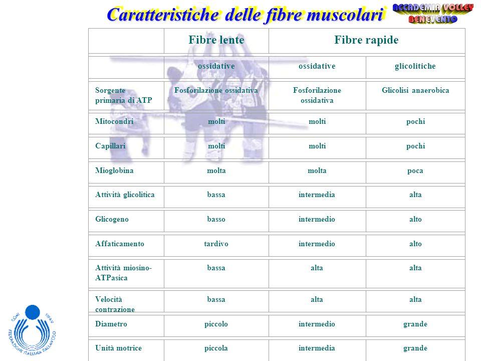 Caratteristiche delle fibre muscolari