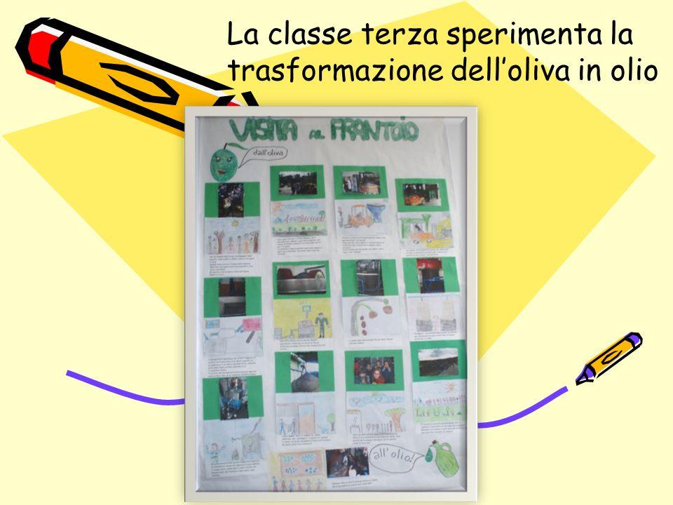 La classe terza sperimenta la trasformazione dell'oliva in olio