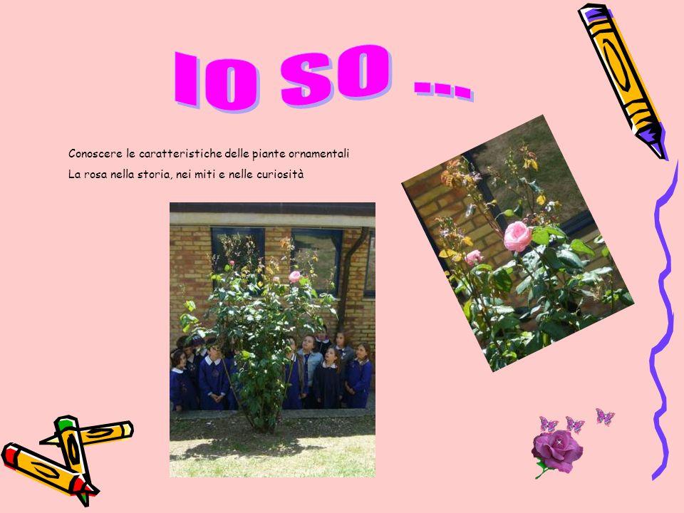 IO SO ... Conoscere le caratteristiche delle piante ornamentali