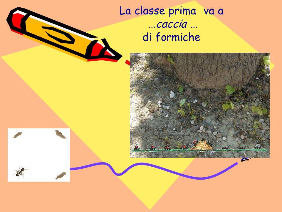 La classe prima va a …caccia … di formiche