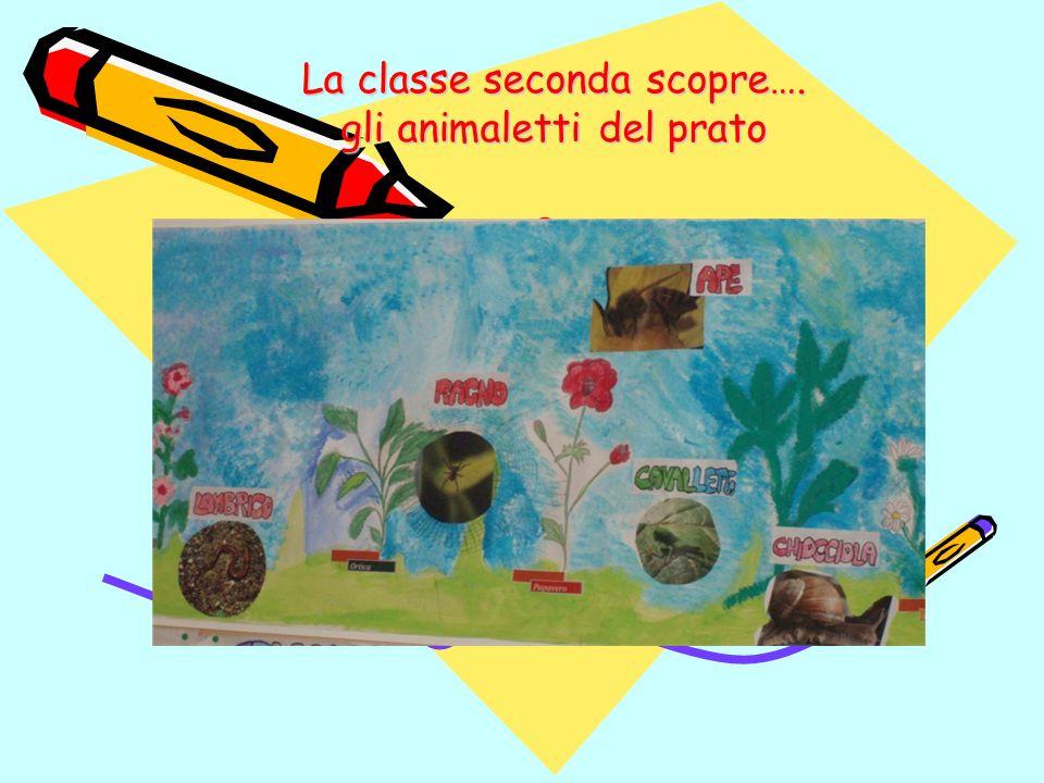 La classe seconda scopre…. gli animaletti del prato