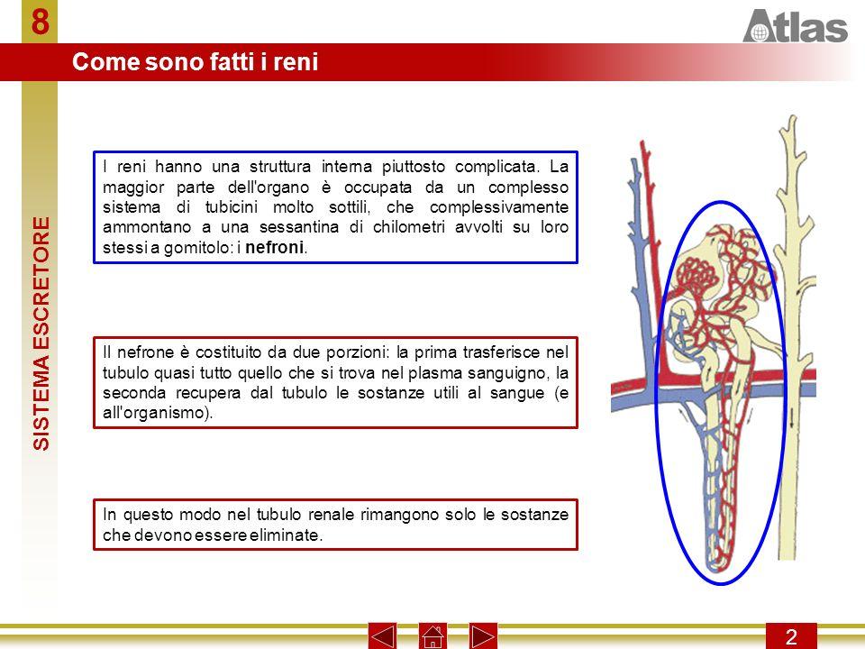 8 Come sono fatti i reni SISTEMA ESCRETORE 2