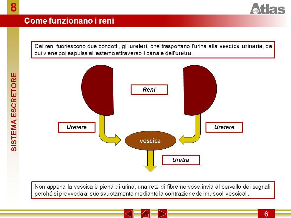 8 Come funzionano i reni SISTEMA ESCRETORE vescica 6