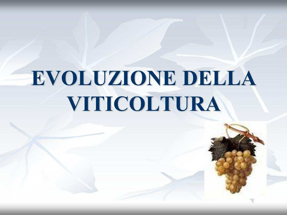 EVOLUZIONE DELLA VITICOLTURA