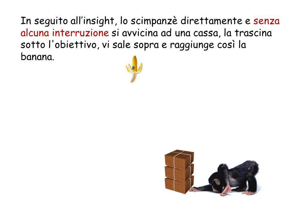 In seguito all'insight, lo scimpanzè direttamente e senza alcuna interruzione si avvicina ad una cassa, la trascina sotto l obiettivo, vi sale sopra e raggiunge così la banana.