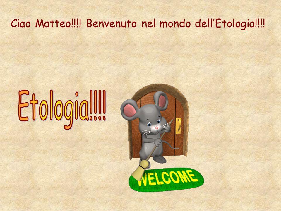 Ciao Matteo!!!! Benvenuto nel mondo dell'Etologia!!!!