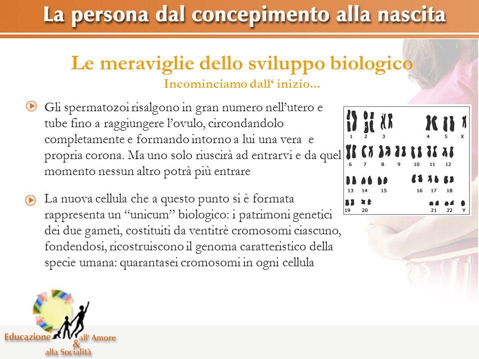 Le meraviglie dello sviluppo biologico Incominciamo dall' inizio...