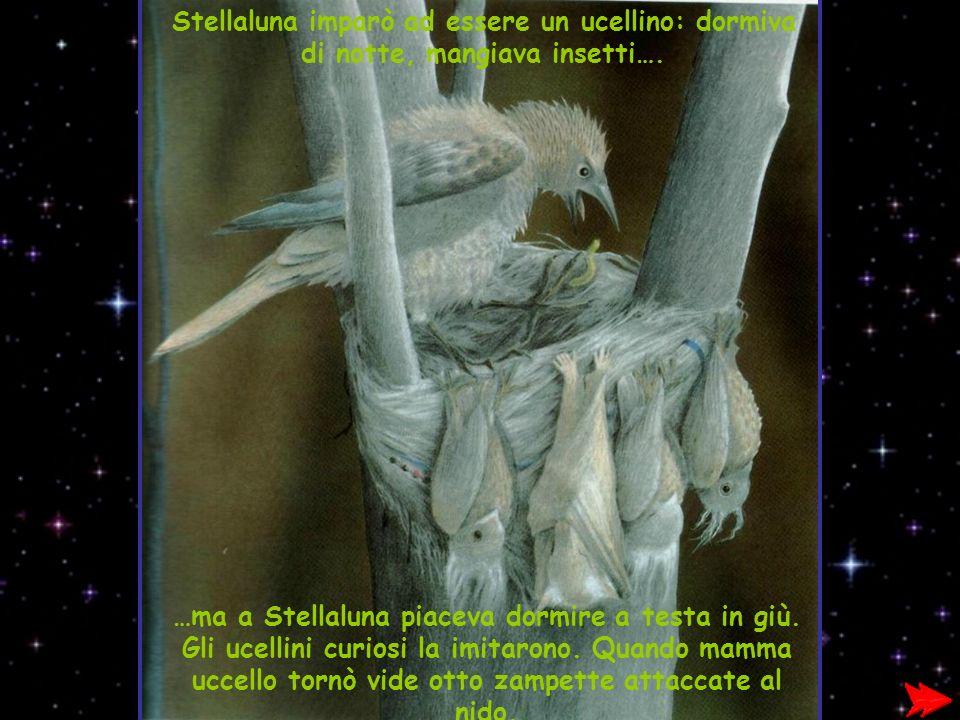 Stellaluna imparò ad essere un ucellino: dormiva di notte, mangiava insetti….