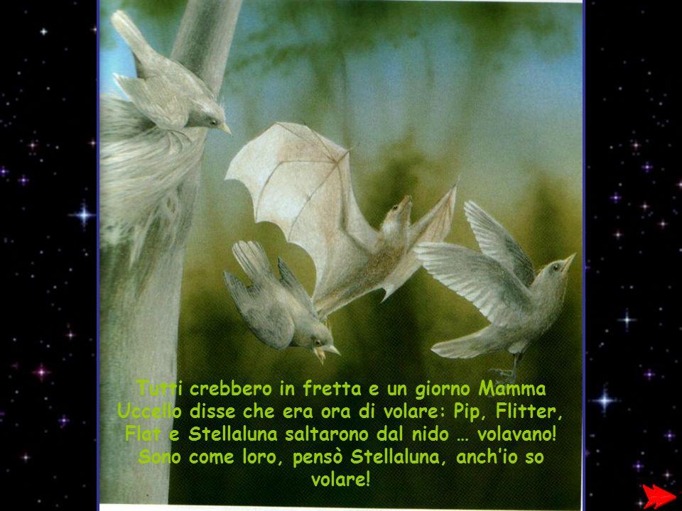 Tutti crebbero in fretta e un giorno Mamma Uccello disse che era ora di volare: Pip, Flitter, Flat e Stellaluna saltarono dal nido … volavano.