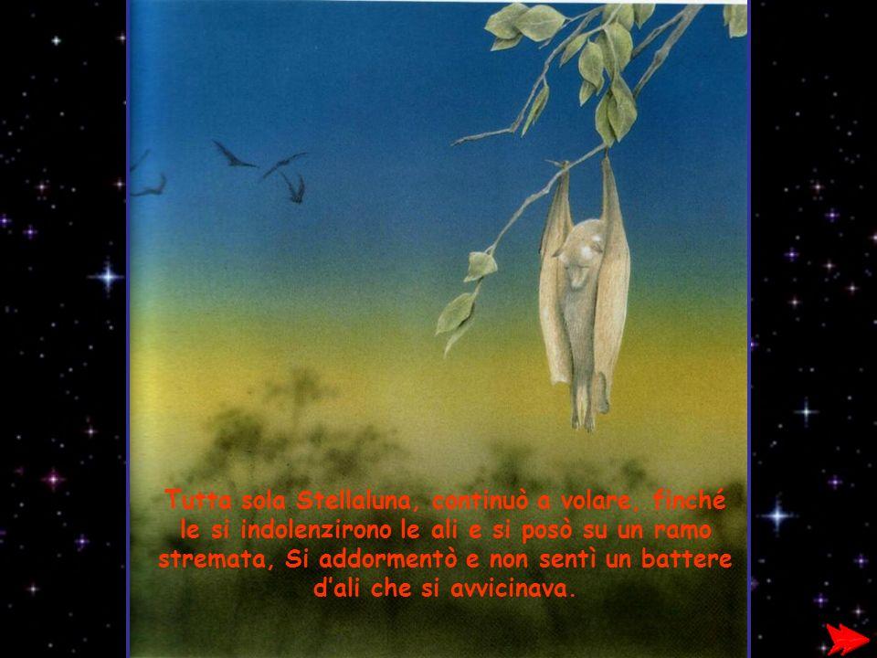 Tutta sola Stellaluna, continuò a volare, finché le si indolenzirono le ali e si posò su un ramo stremata, Si addormentò e non sentì un battere d'ali che si avvicinava.