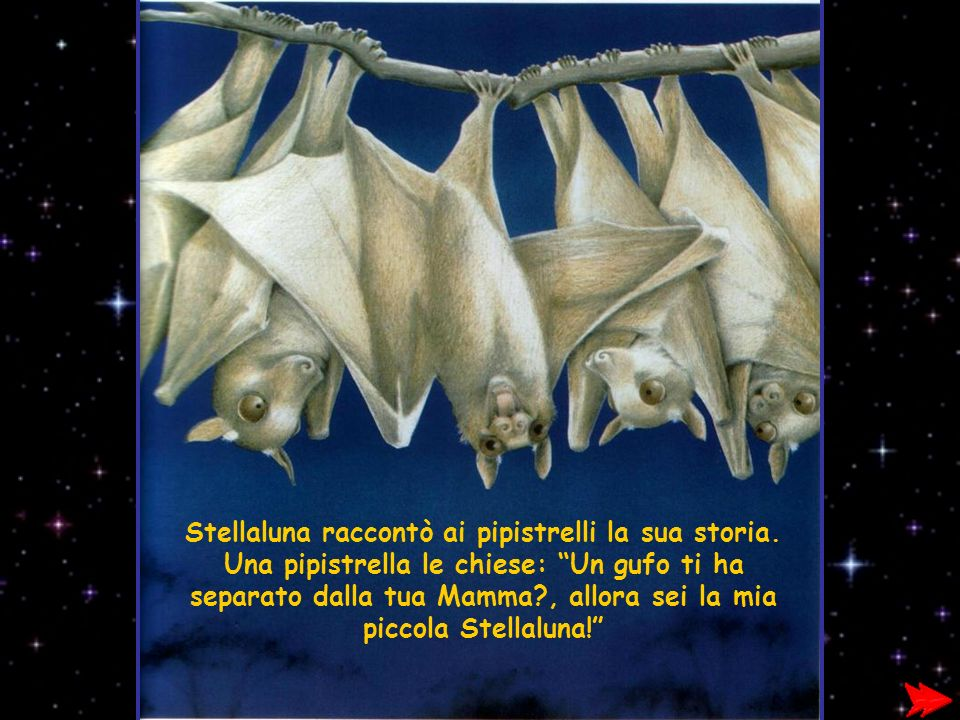 Stellaluna raccontò ai pipistrelli la sua storia