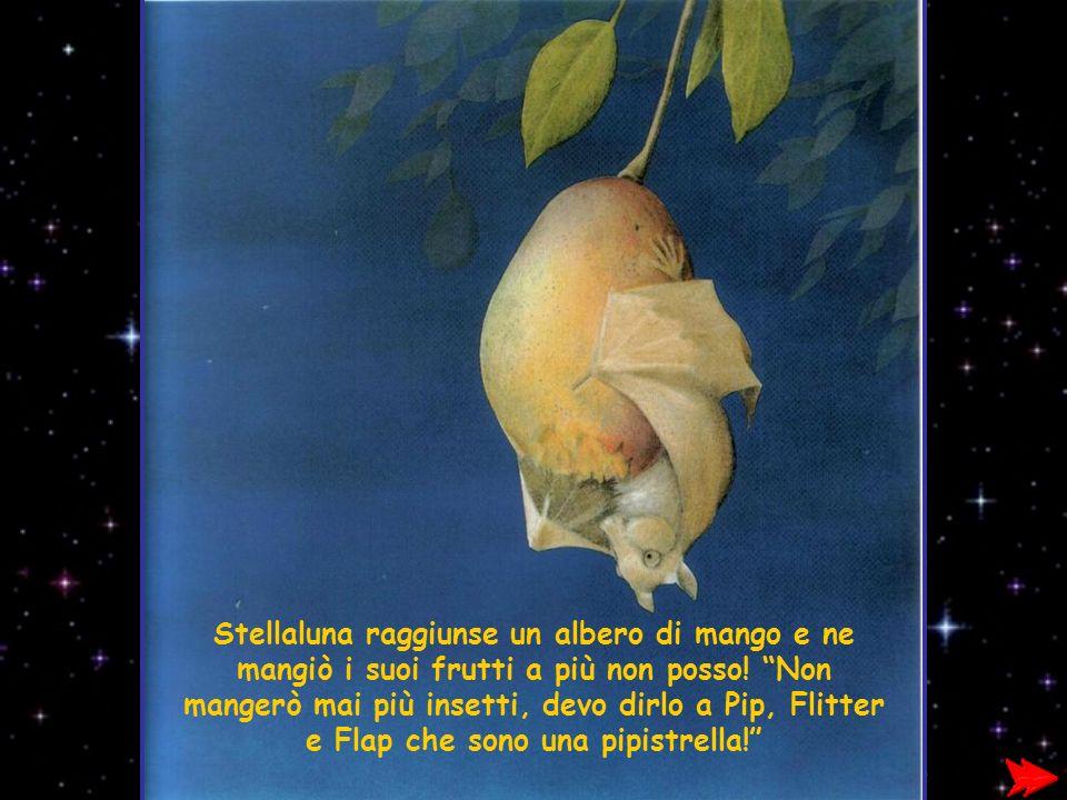 Stellaluna raggiunse un albero di mango e ne mangiò i suoi frutti a più non posso.