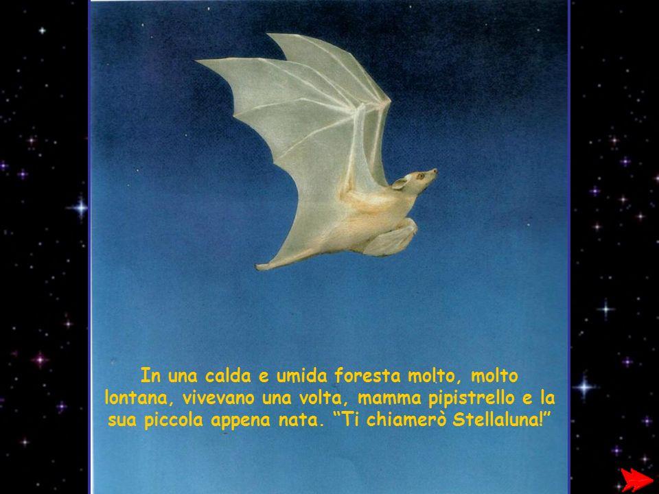 In una calda e umida foresta molto, molto lontana, vivevano una volta, mamma pipistrello e la sua piccola appena nata.