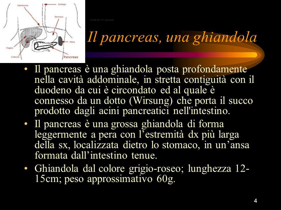Il pancreas, una ghiandola