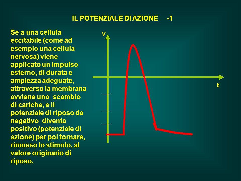 IL POTENZIALE DI AZIONE -1