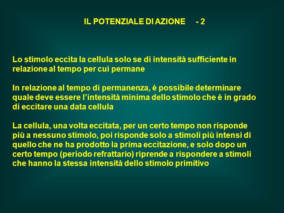 IL POTENZIALE DI AZIONE - 2