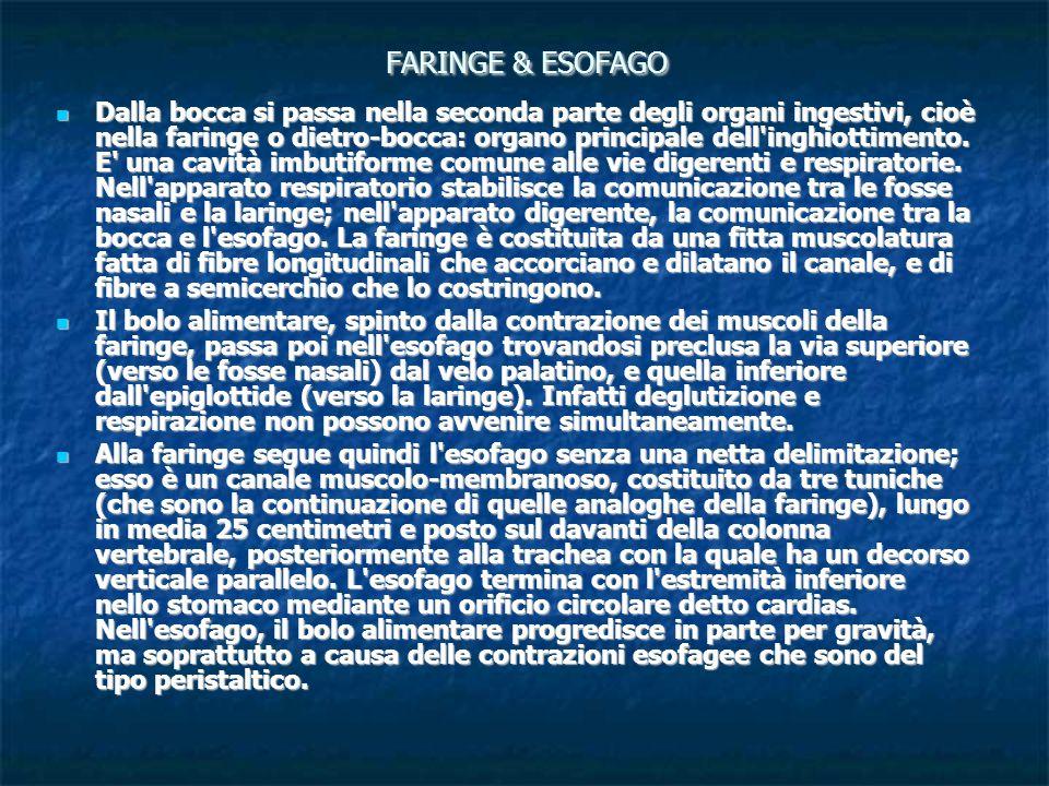FARINGE & ESOFAGO