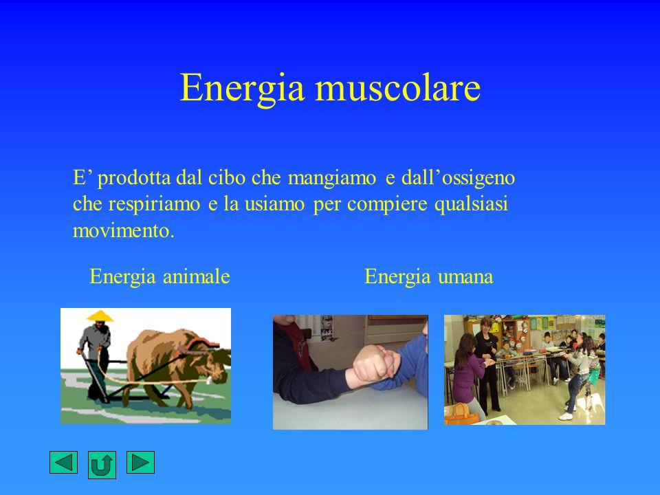 Energia muscolare E' prodotta dal cibo che mangiamo e dall'ossigeno che respiriamo e la usiamo per compiere qualsiasi movimento.
