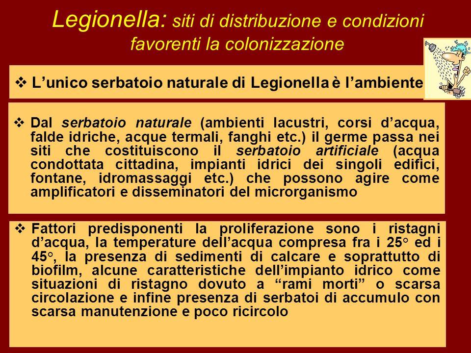 Legionella: siti di distribuzione e condizioni favorenti la colonizzazione