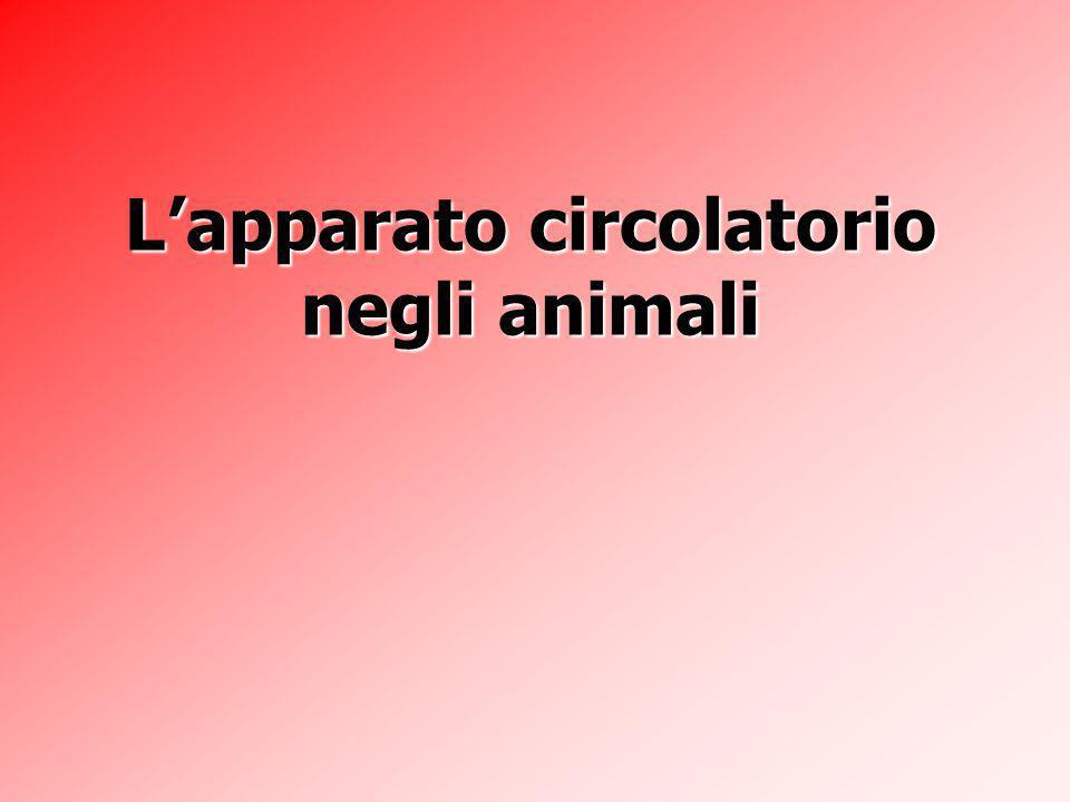 L'apparato circolatorio negli animali