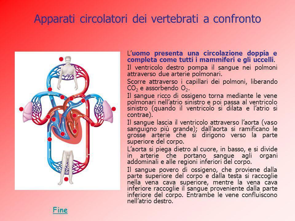 Apparati circolatori dei vertebrati a confronto