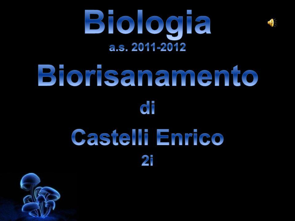 Biologia a.s. 2011-2012 Biorisanamento di Castelli Enrico 2i