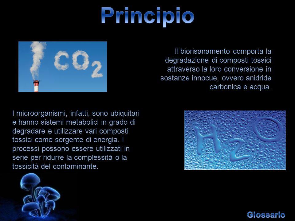 Principio Glossario Il biorisanamento comporta la