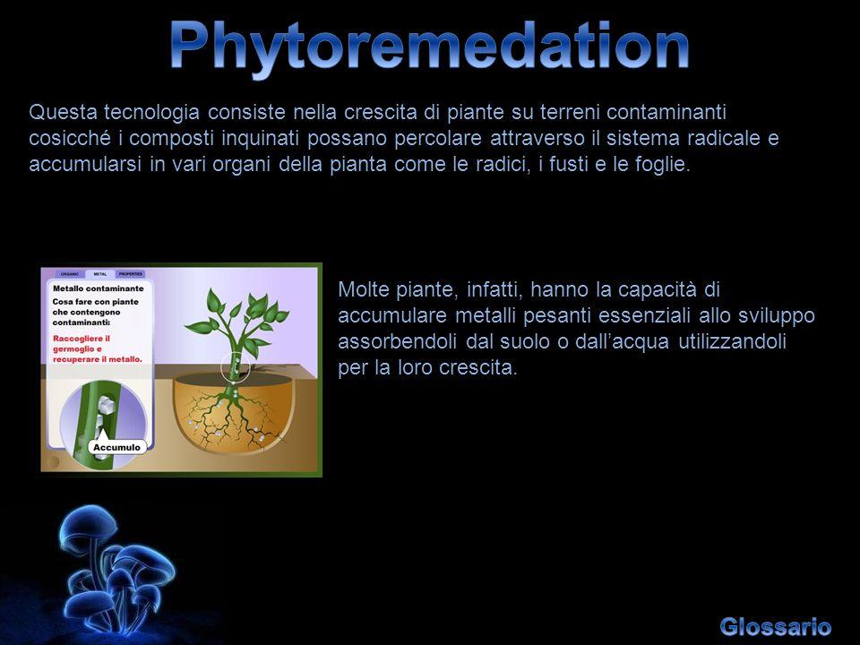Phytoremedation Glossario
