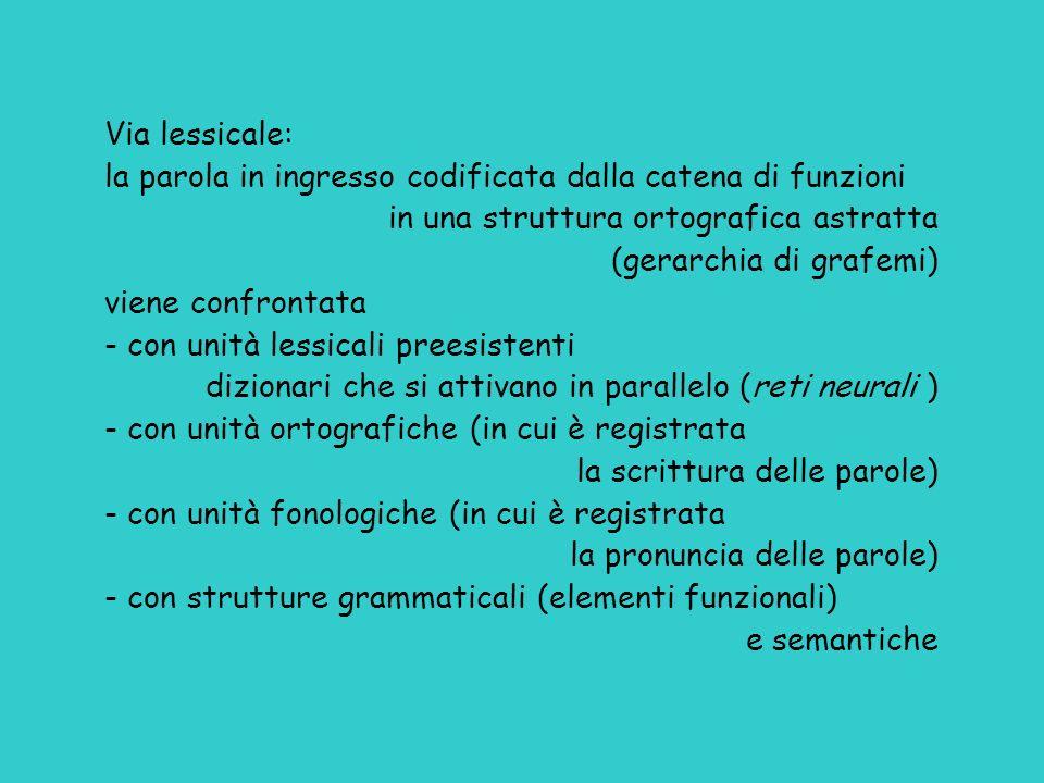 Via lessicale: la parola in ingresso codificata dalla catena di funzioni. in una struttura ortografica astratta.