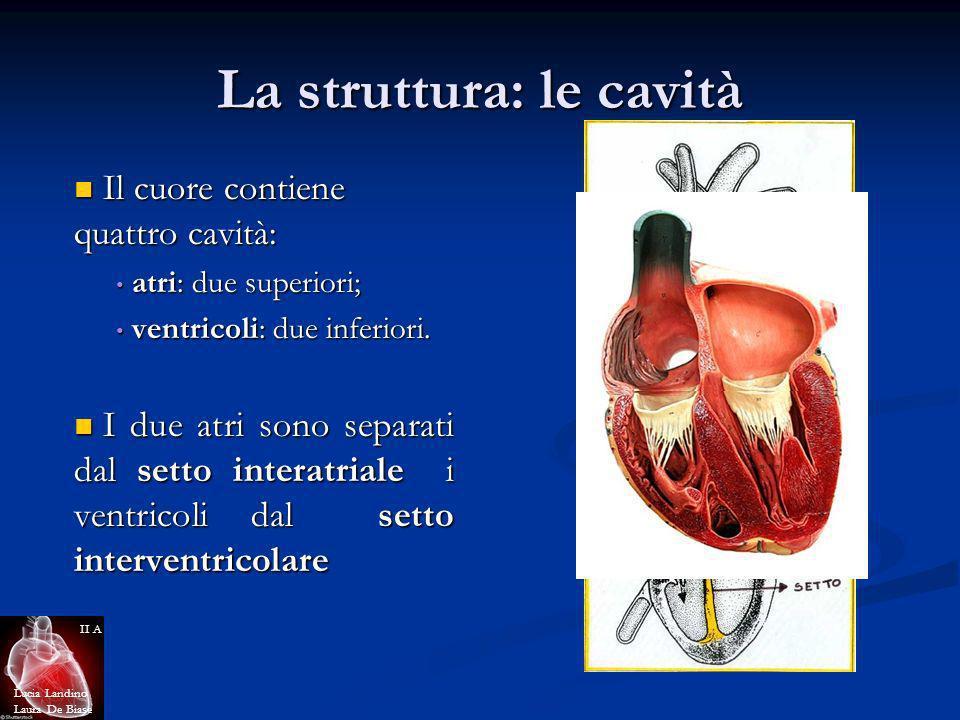 La struttura: le cavità