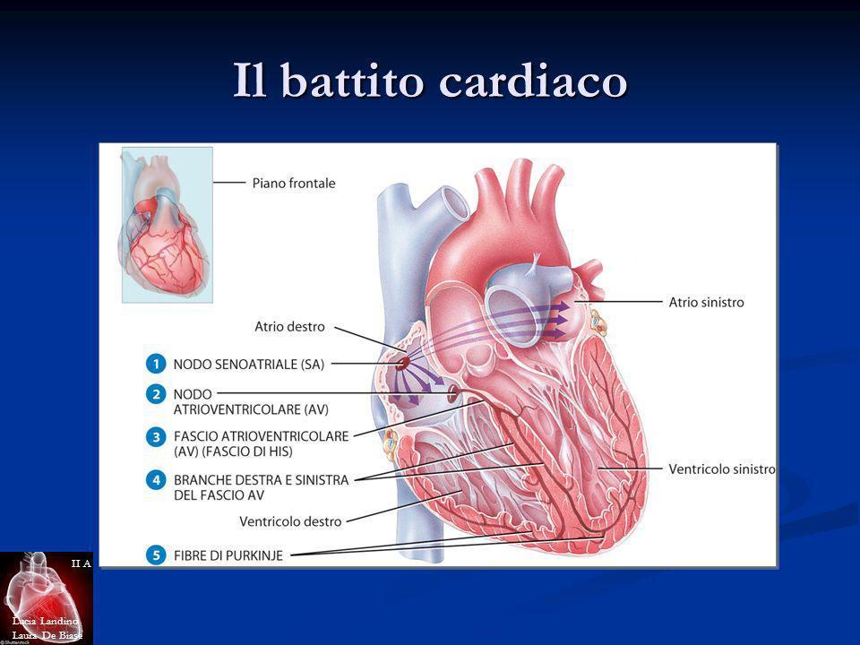 Il battito cardiaco Lucia Landino Laura De Biase II A