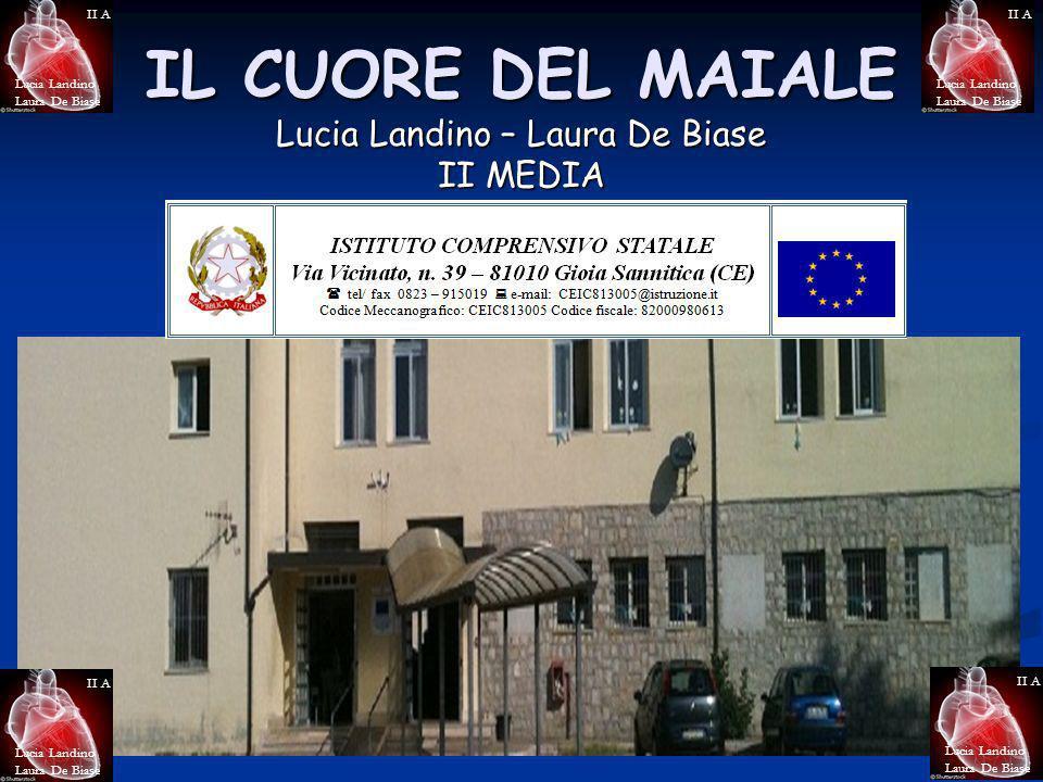 IL CUORE DEL MAIALE Lucia Landino – Laura De Biase II MEDIA