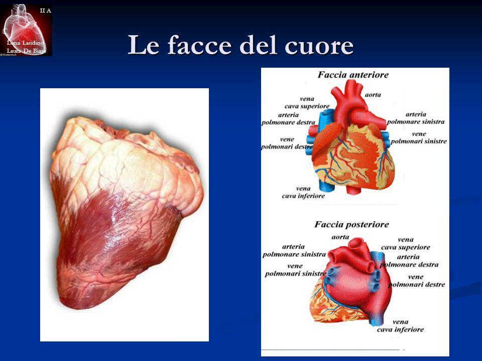 Lucia Landino Laura De Biase II A Le facce del cuore