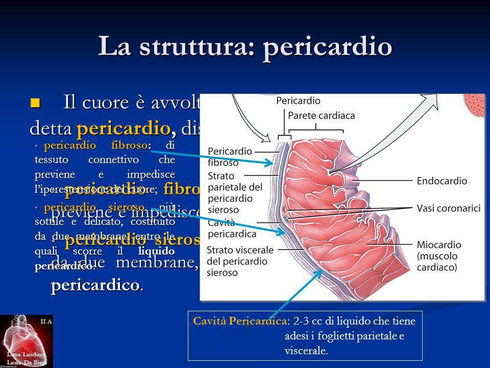 La struttura: pericardio