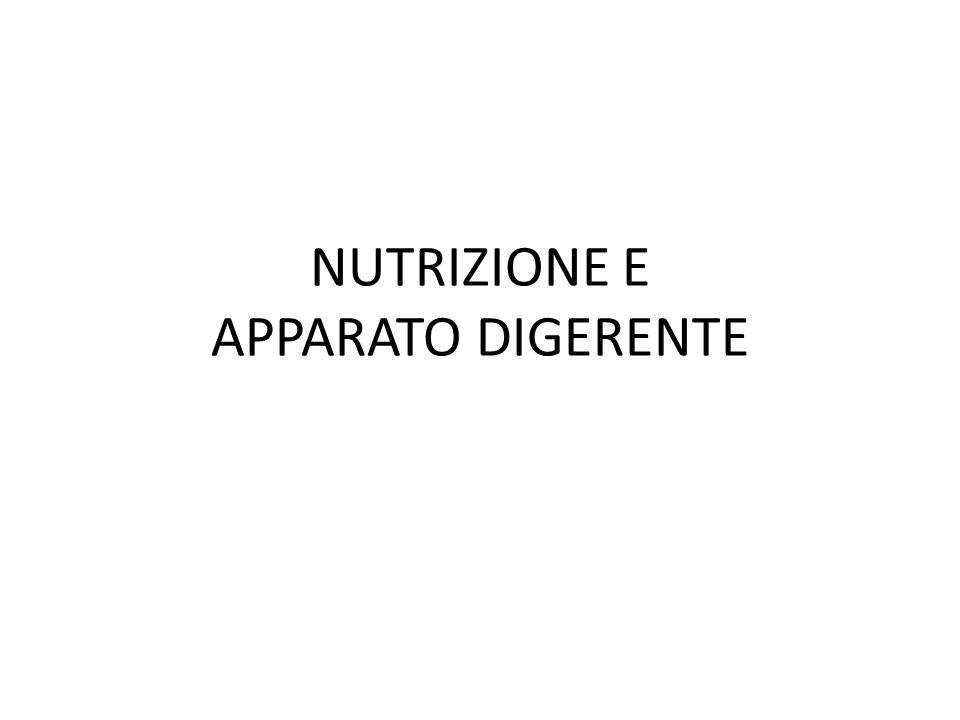 NUTRIZIONE E APPARATO DIGERENTE