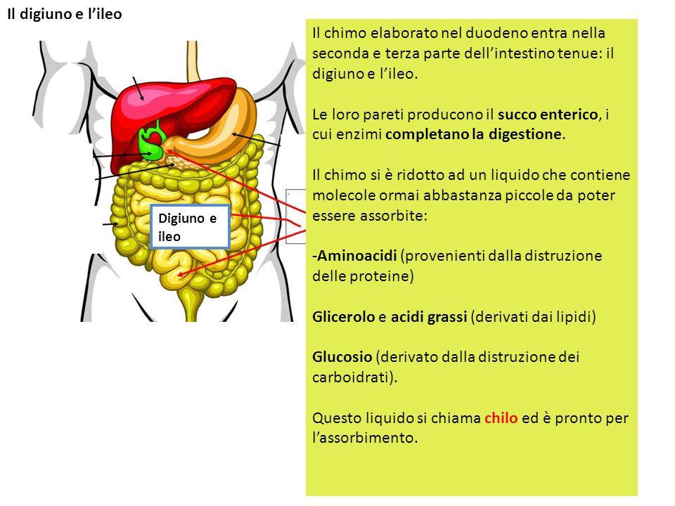 -Aminoacidi (provenienti dalla distruzione delle proteine)