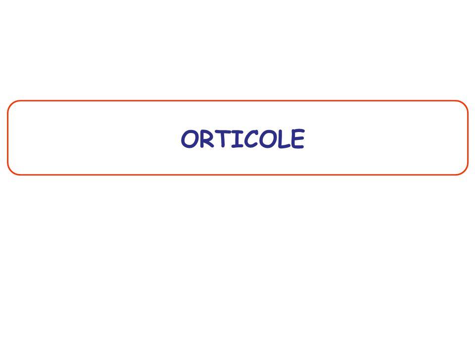 ORTICOLE