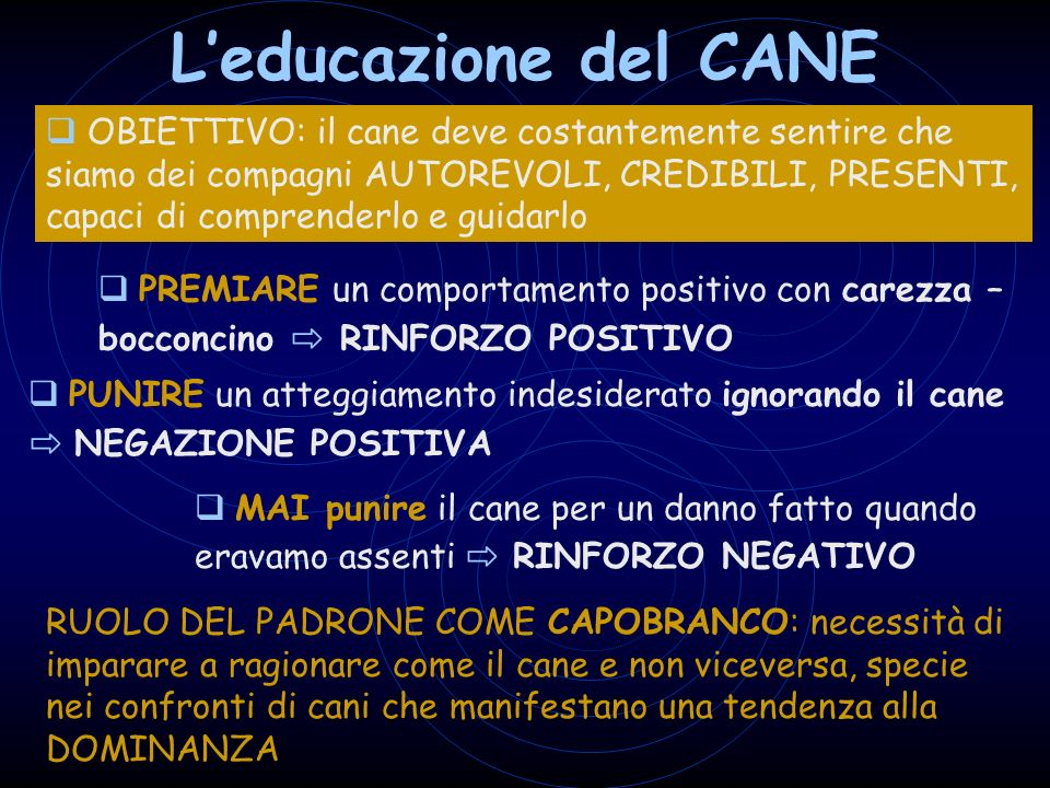 L'educazione del CANE