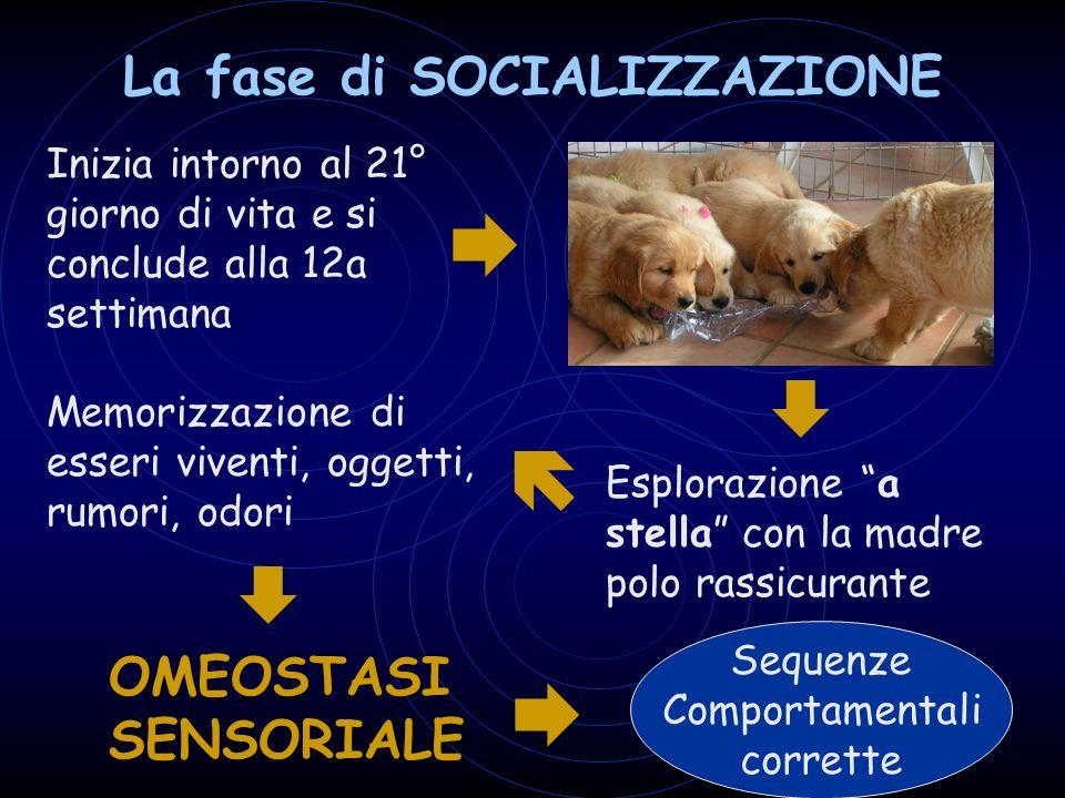 La fase di SOCIALIZZAZIONE