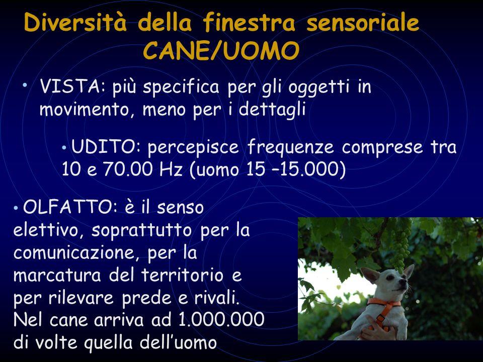 Diversità della finestra sensoriale CANE/UOMO