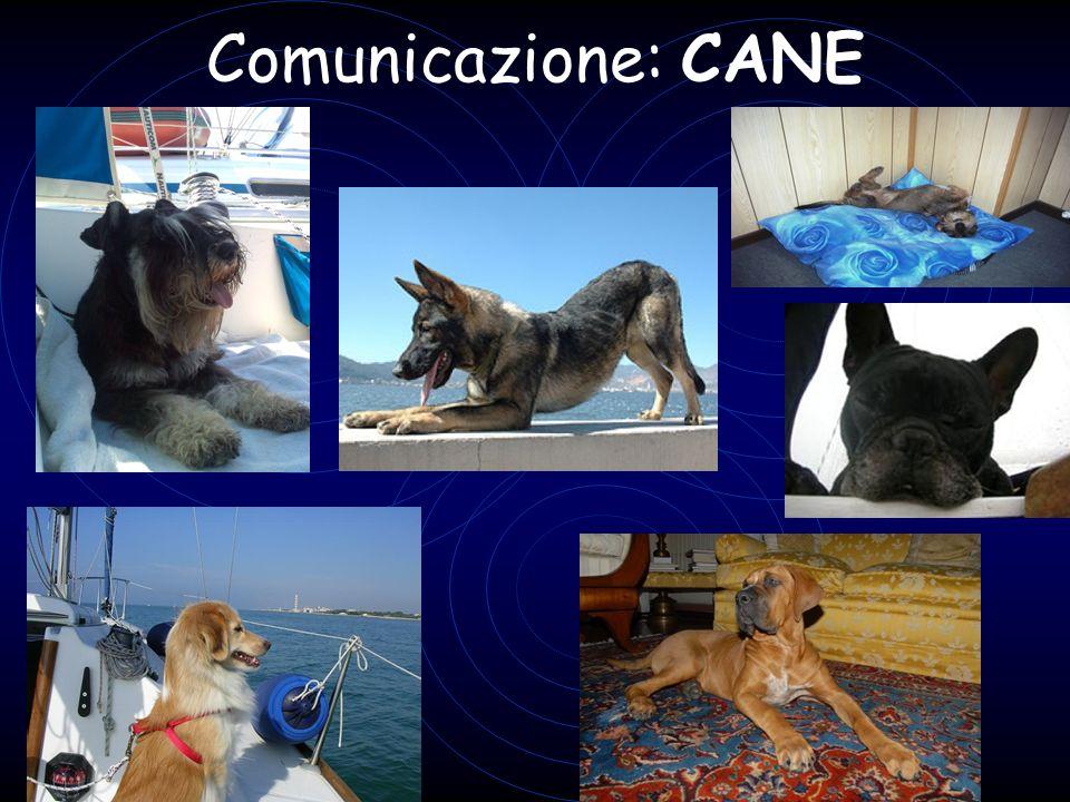 Comunicazione: CANE