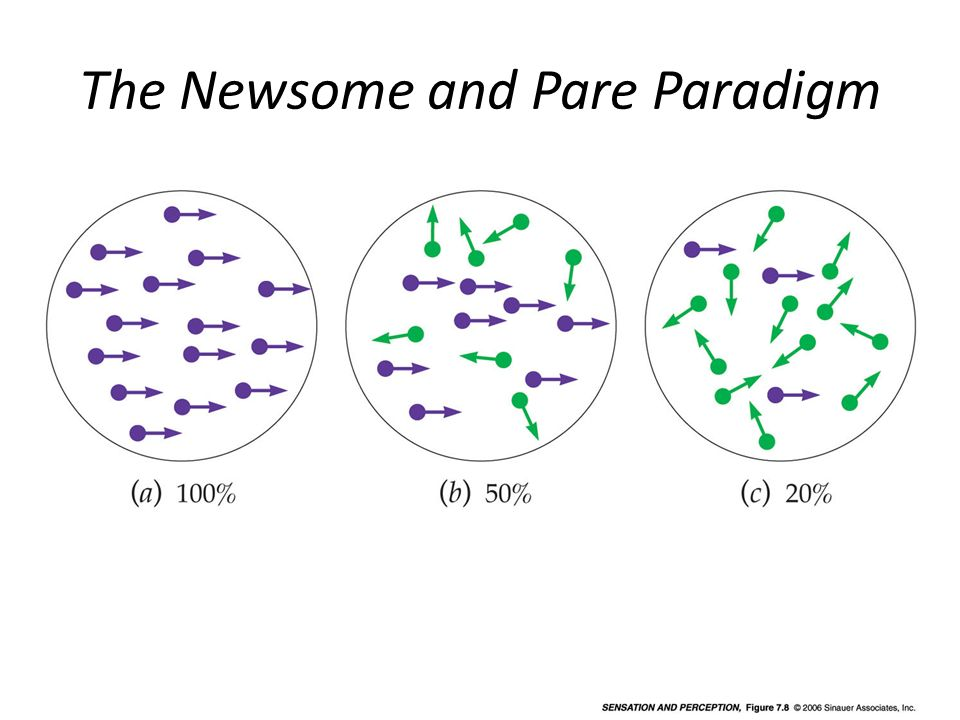 The Newsome and Pare Paradigm