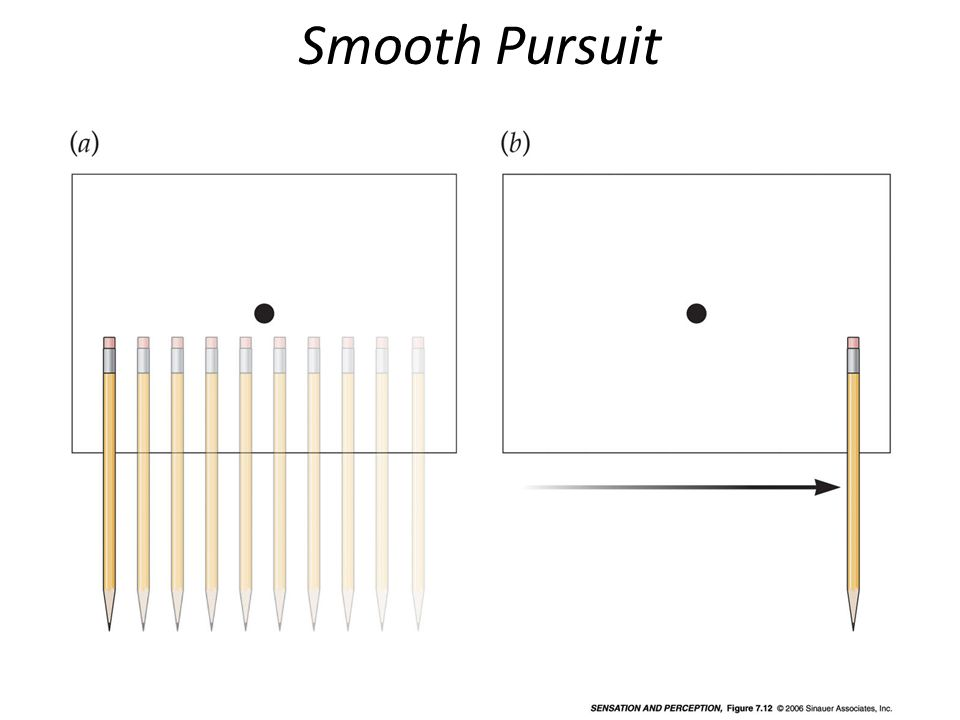 Smooth Pursuit Demonstrate eye movements (Figure 7.12).