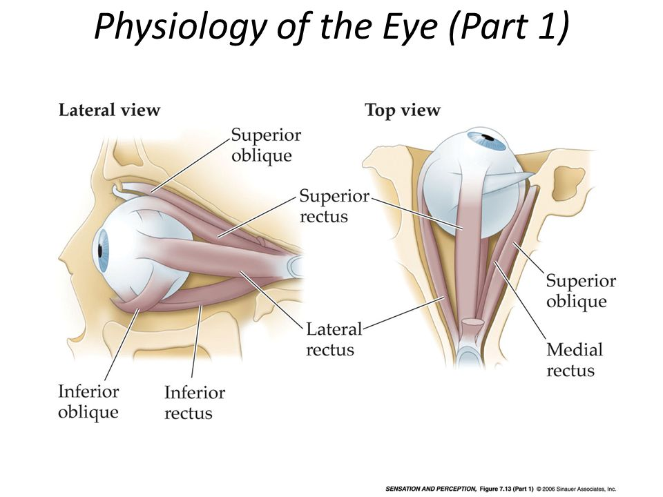 Physiology of the Eye (Part 1)