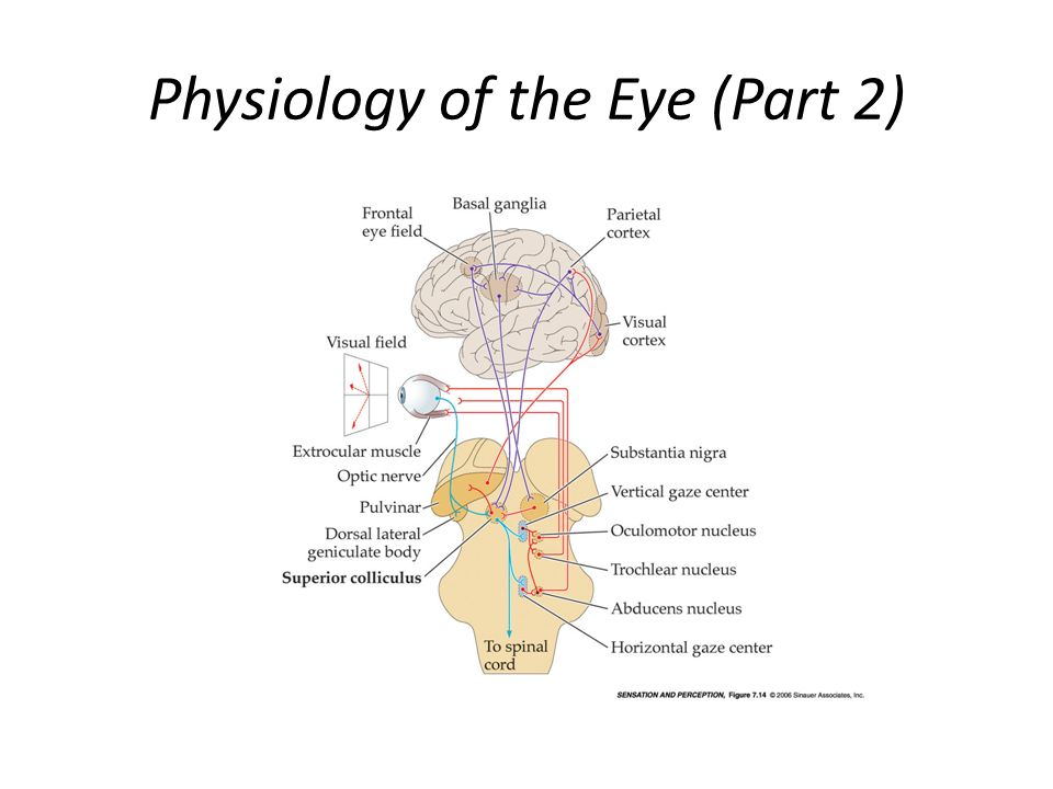 Physiology of the Eye (Part 2)
